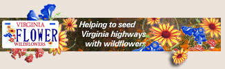 Wildflowers license plates